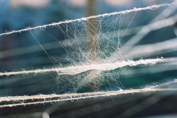Ismini Samanidou - The Revenge of Arachni (2003) Installation, Kea, Greece